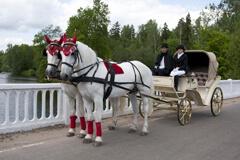 Свадебный фаэтон, запряженный парой лошадей